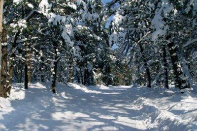 winterstimmung22_20081002_2006676293.jpg